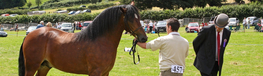 Vaynor Show © Lesley Newcombe