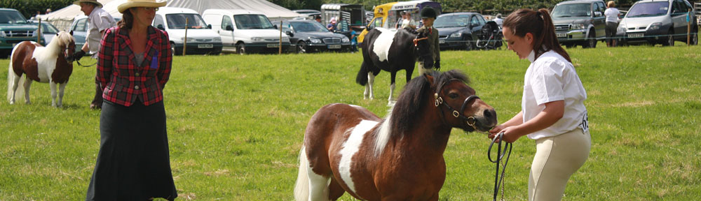 Pony at Vaynor Show © Lesley Newcombe